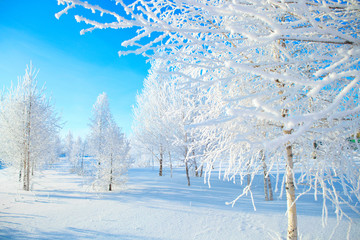 snowy tree in park. winter nature. Beautiful white winter. Blue sky.