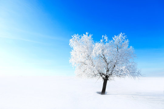 Alone Tree in the snow on a field winter