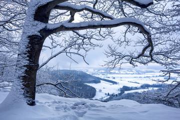 Süntel im Winter mit Schnee