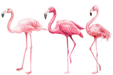 set of  pink flamingo on an isolated white background, watercolor illustration Fototapete