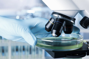 Fototapete - Scientist putting Petri dish with liquid under microscope, closeup. Laboratory analysis