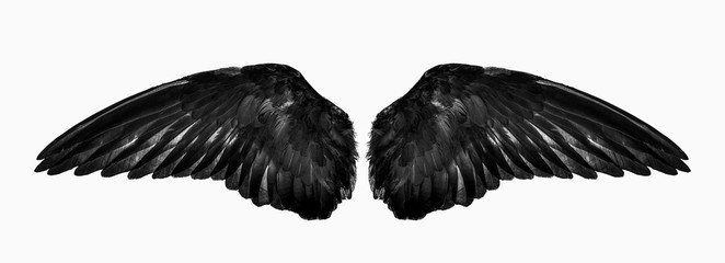 wings isolated on a white background