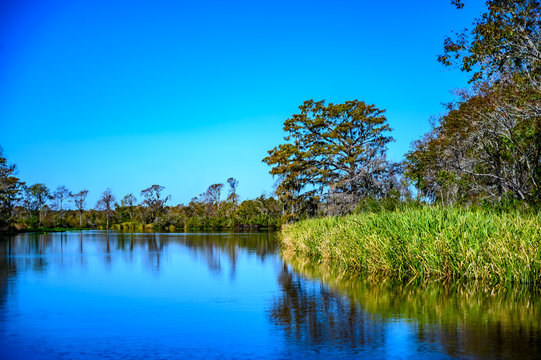 Lowcountry marsh land that was formerly rice fields in South Carolina