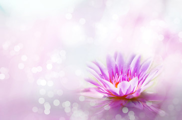 Soft pink lotus on pond with soft sunlight blur bokeh reflection on water background, Lily water...