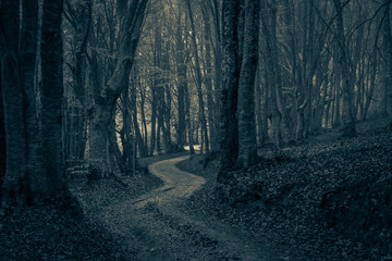 A pathway between trees leading into a dark and misty forest