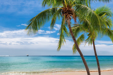 Wall Murals Beach Paradise beach with palm trees and tropical sea in Key West, Florida