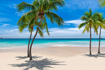 Fototapete - Paradise beach with palm trees and tropical sea