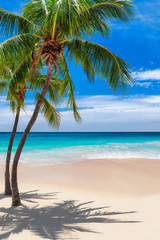 Fototapete - Palm trees on tropical beach and blue sea in Caribbean island. Summer vacation and tropical beach concept.