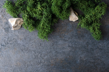 Top view of fresh green moss and several stones on the damp gey surface. Free space fr text
