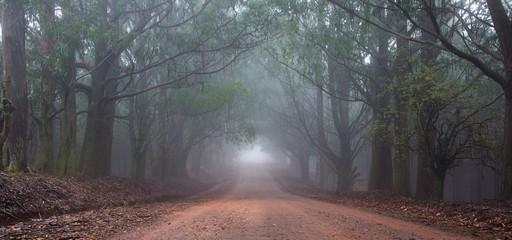 Misty road Fototapete