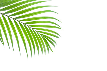 leaves of coconut isolated on white background Wall mural