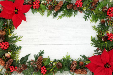 Poinsettia flower background border with holly, mistletoe and winter flora on rustic white wood background with copy space. Traditional Thanksgiving or Christmas theme.