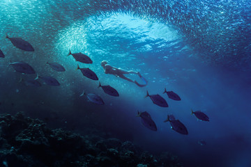 Under water photography of diver and school of fish