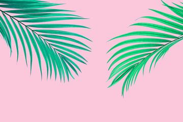 Natural palm leaf on pastel pink background, nature background