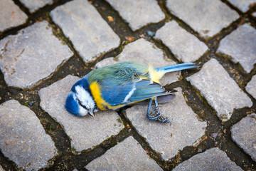 Mortally crashed titmouse on a street Fototapete