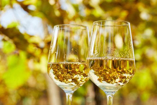 Two glasses full of white wine in autumn vineyard