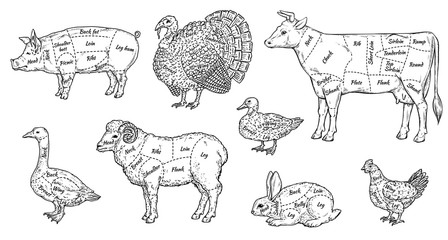 Animal meat cut parts set - butcher guide to different parts of farm animals