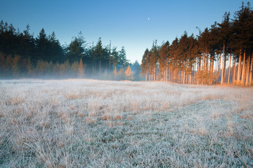 Wall Mural - moon over frosted forest meadow in fog