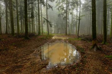 un chemin forestier avec une grande flaque d'eau boueuse