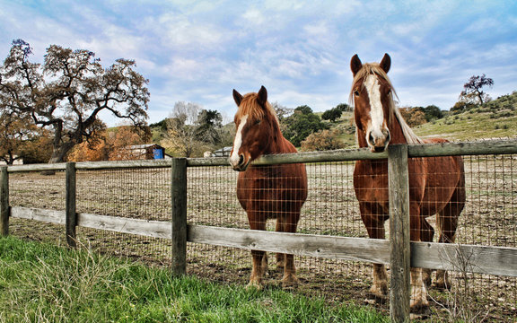 Two brown horses with white stars, look over a wooden, farm fence