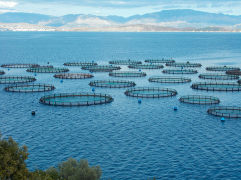 Sea fish farm nets. Cages for fish farming sea bream and bass.
