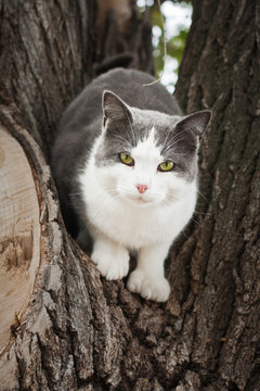 cat with green eyes in tree