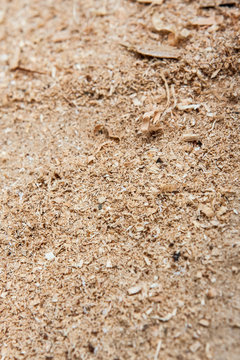 Sawdust Portrait