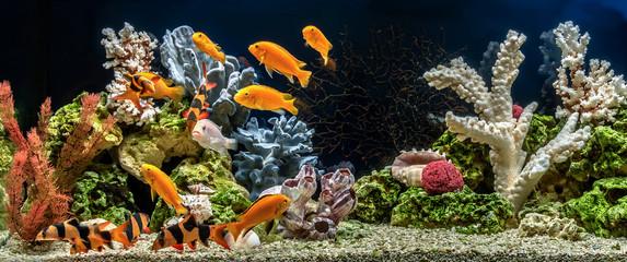 Freshwater aquarium as pseudo-sea. Aqua scape and aqua design