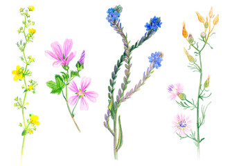 Botanical sketches of wild grasses and flowers