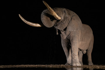 The Night Tusker