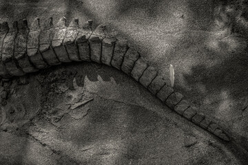 A powerful crocodile swamp tail close-up picture