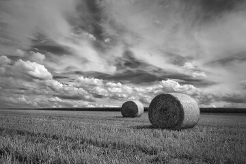 nach der Getreide Ernte in Schwarzweiß Fotoväggar