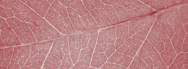 Fototapete - Abstract organic texture of leaf. Nature wallpaper.