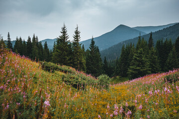 壁紙(ウォールミューラル) - Location Carpathian national park, Ukraine, Europe.