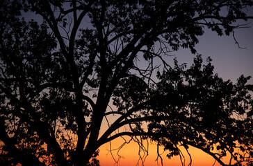 Photo sur Toile Oiseaux sur arbre Beautiful Sunset with Tree Silhouette