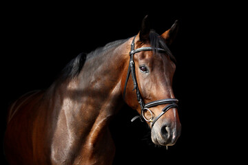 Tuinposter Paarden Brown horse portrait on black background