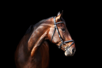 Photo sur cadre textile Chevaux Brown horse portrait on black background
