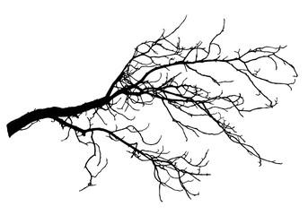 Chestnut tree branch silhouette, vector illustration. Fototapete