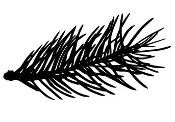 Fir tree branch silhouette, vector illustration.