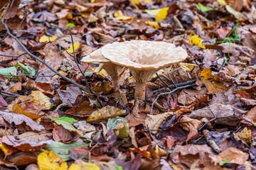 mushroom between leaf