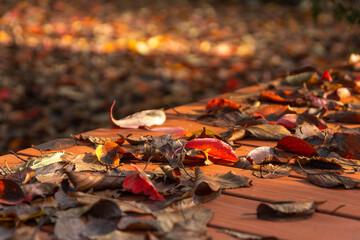 枯れ葉が落ちた公園のベンチ