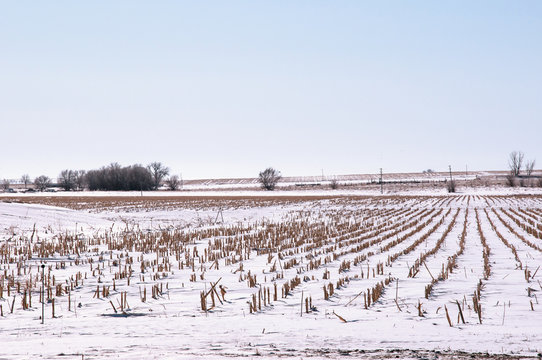 Winter snow covers a field of corn stubble after harvest