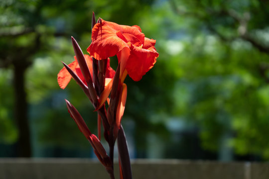 isolated flower on sunny day
