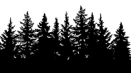 silhouette of fir trees, forest landscape. On white background