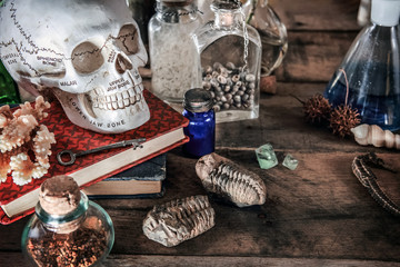 Old, science still life of a skull and natural objects with dramatic lighting