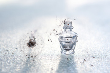 Dandelion seed wishes, saved in a bottle