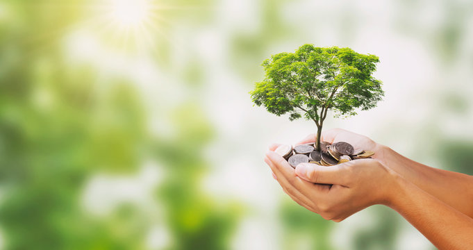 tree growing on pile of money in hand and green nature background
