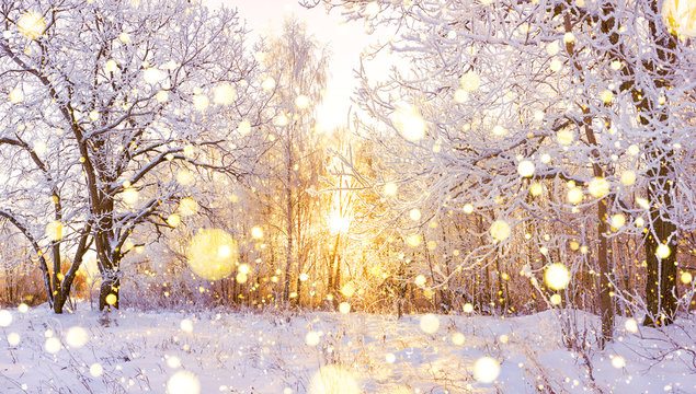 snowy winter landscape panorama