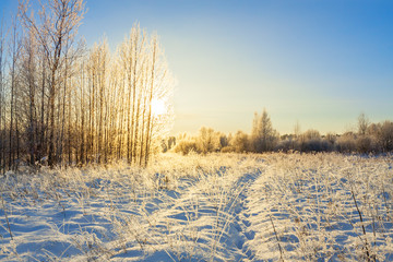 Spoed Foto op Canvas Beige snowy winter landscape with forest and sun