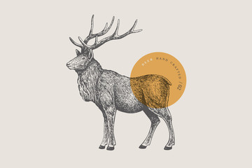 Fototapeta Hand drawing of a forest deer on a light background. Deer-Izyubr in vintage engraving style. Vector retro illustration.